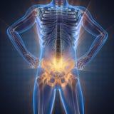 Imagem da varredura da radiografia dos ossos do ser humano Imagens de Stock