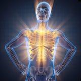 Imagem da varredura da radiografia dos ossos do ser humano imagem de stock