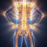Imagem da varredura da radiografia dos ossos do ser humano fotos de stock