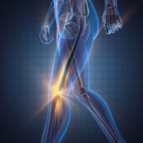 Imagem da varredura da radiografia dos ossos do ser humano fotos de stock royalty free