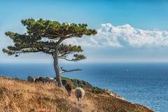 Imagem da vista geral do mar com árvore só e os carneiros que escondem na máscara Fotos de Stock