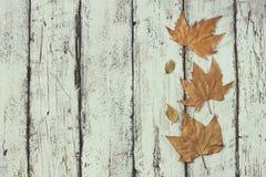 Imagem da vista superior do fundo textured de madeira das folhas de outono Copie o espaço Fotografia de Stock Royalty Free