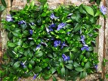 Imagem das flores no fundo da grama Foto de Stock Royalty Free