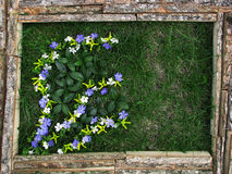 Imagem das flores no fundo da grama Fotografia de Stock Royalty Free