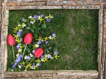 Imagem das flores no fundo da grama Quadro feito do unp Fotos de Stock Royalty Free