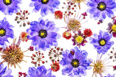 Imagem das flores selvagens congeladas no sblock de Fotografia de Stock