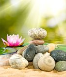 Imagem das pedras e da flor de lótus no close-up da água, Fotos de Stock