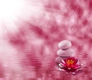 Imagem das pedras e da flor de lótus no close-up da água, Imagem de Stock