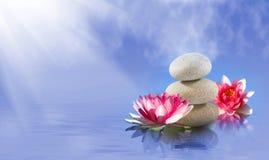Imagem das pedras e da flor de lótus no close-up da água, Foto de Stock Royalty Free