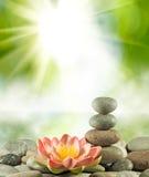 Imagem das pedras e da flor de lótus no close-up da água, Fotografia de Stock