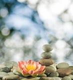 Imagem das pedras e da flor de lótus no close-up da água, Imagem de Stock Royalty Free