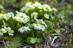 Imagem de flores bonitas do jardim do arbusto? perca-acima imagens de stock royalty free