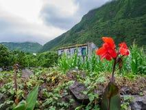 Imagem de flores coloridas bonitas com casa e a montanha nevoenta da floresta no fundo Açores Portugal imagem de stock