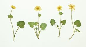 Imagem de flores secadas em diversas variações Imagem de Stock