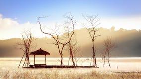 A imagem de fundo calma do sol brilha através das árvores da viúva foto de stock royalty free