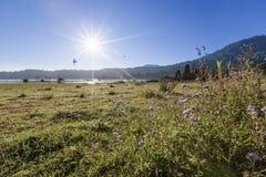 Imagem de fundo calma dos pássaros, das plantas e do céu azul fotos de stock royalty free