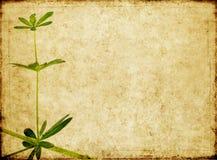 Imagem de fundo com textura earthy Imagem de Stock