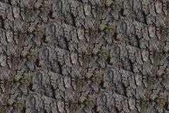 Imagem de fundo da casca de árvore Imagem de Stock