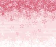 Imagem de fundo da flor de cerejeira Fotografia de Stock Royalty Free