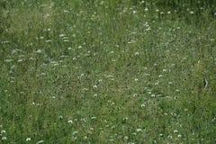 Imagem de fundo do campo de grama luxúria sob o céu azul foto de stock royalty free
