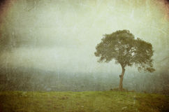Imagem de Grunge de uma árvore em um papel do vintage imagem de stock