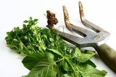 Imagem de jardinagem Fotos de Stock