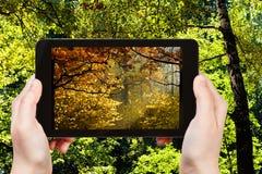 Imagem de madeiras do outono durante a mudança das estações Fotografia de Stock Royalty Free