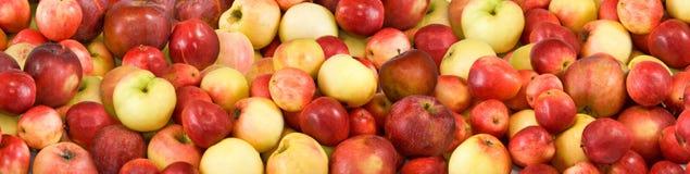 Imagem de muitas maçãs maduras imagens de stock royalty free