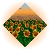 Imagem de um campo com um girassol na forma de um diamante ilustração stock
