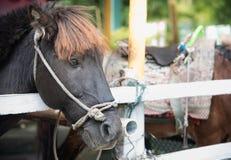 Imagem de um cavalo preto, cavalo preto bonito, cabeça de um preto imagens de stock