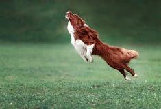 Imagem de um corredor rápido do cão imagens de stock