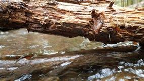 Imagem de um ramo sobre um lago na floresta bávara (Alemanha) fotos de stock royalty free