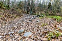 Imagem de uma estrada de terra com muitas pedras fracas e grandes com folhas secas fotografia de stock