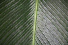 A imagem de uma folha olha como uma estrada entre os campos fotos de stock