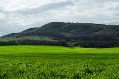 Imagem de uma paisagem de um campo de grama verde ou de trigo e de um céu azul com testes padrões das nuvens O conceito de Foto de Stock