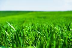 Imagem de uma paisagem de um campo de grama verde ou de trigo e de um céu azul com testes padrões das nuvens O conceito de Fotografia de Stock Royalty Free