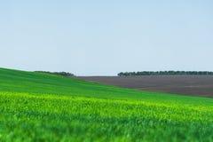 Imagem de uma paisagem de um campo de grama verde ou de trigo e de um céu azul com testes padrões das nuvens O conceito de Imagens de Stock Royalty Free