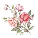 A imagem de uma rosa Ilustração da aquarela da tração da mão Imagens de Stock