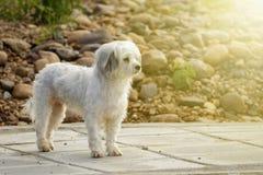 Imagem do cão branco no fundo da natureza pet imagem de stock royalty free