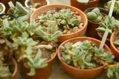 Imagem do cacto no jardim botânico Imagens de Stock