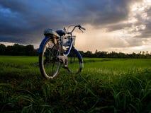 A imagem do campo da bicicleta e do arroz Fotografia de Stock