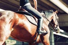 Imagem do cavalo de equitação bonito novo da menina foto de stock