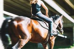 Imagem do cavalo de equitação bonito novo da menina fotografia de stock