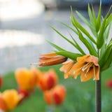 Imagem do close up bonito das flores Fotografia de Stock