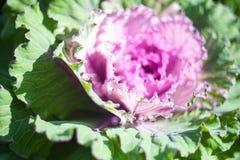 Imagem do close-up da queda decorativa Fotos de Stock