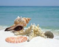 Imagem do close up de escudos do mar em uma praia branca da areia imagens de stock
