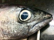 A imagem do close up de peixes de atum dirige da cozinha imagem de stock royalty free