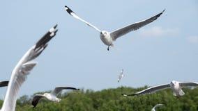 Imagem do close up de um rebanho do voo das gaivotas Foto de Stock
