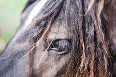 Imagem do close up do olho do cavalo Conceito do animal doméstico Imagem macro do olho dos cavalos imagem de stock