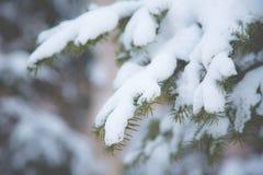 Imagem do close-up do ramo de árvore do abeto coberto com o Frost e a neve Fundo do inverno e do Natal fotos de stock